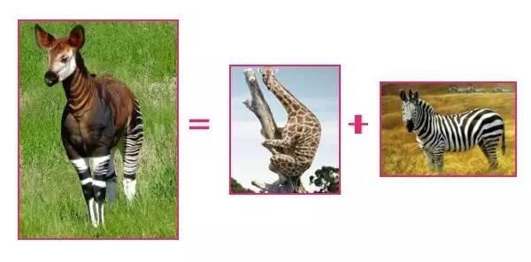 动物鞭名称图片大全