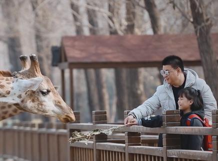熊家姐妹花第一次喂长颈鹿