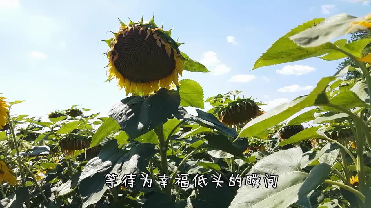 咚哥原创新歌《山葵花》MV 上线绽放