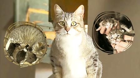 猫行葡萄牙 红酒园的猫咪