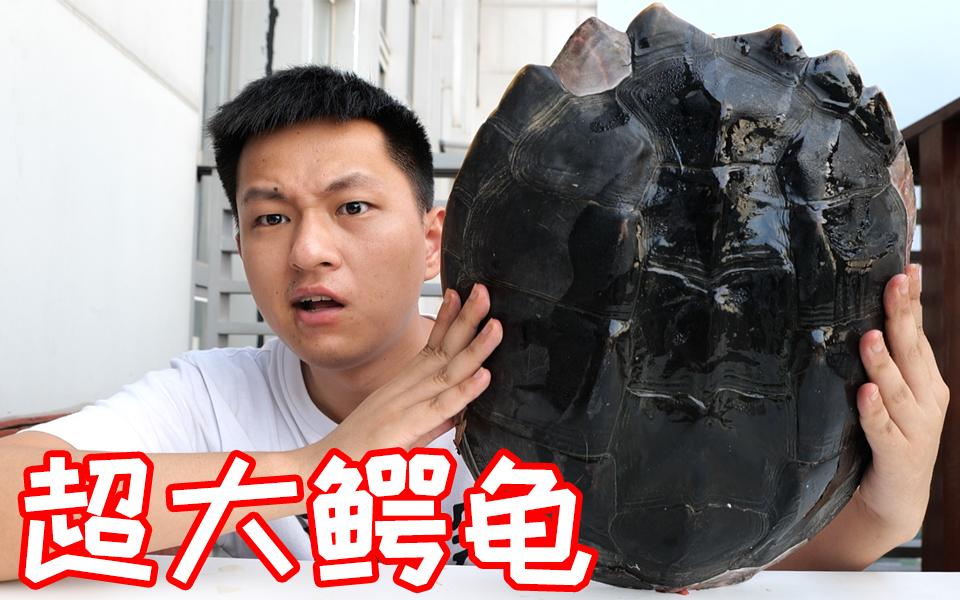 三十多斤的鳄龟做成菜太香了!看这龟壳就感觉大!