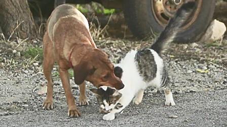 猫行保加利亚 埋头于草丛中