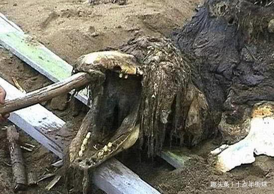 """被俄罗斯雪藏多年的怪物,由于目击者众多,官方给出""""真实""""回应"""