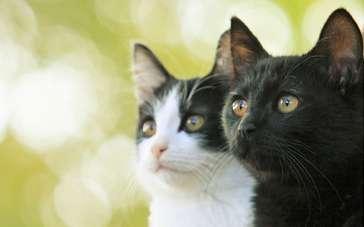 《为什么猫都叫不来》香港预告 小哥与猫的日常