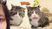 猫咪被美颜后,好像不太聪明的样子!