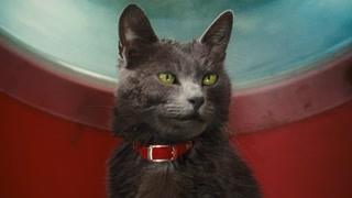 超萌逼供方式 狄格思这样对猫咪
