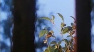 这不是传说    看桂花树怎么帮你考试100分