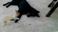 猫狗大战-7月2日