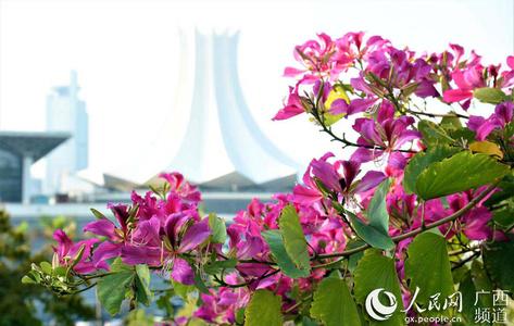 广西南宁:冬日暖阳花绽放