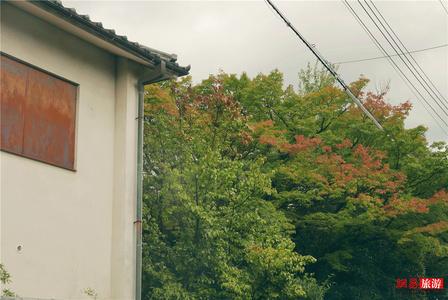 京都的秋天到底有多美?