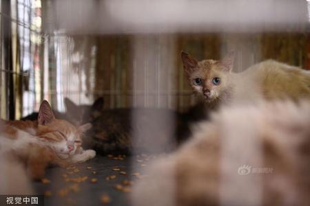 广州近百猫狗被困宠物店 政府、志愿者合力施救