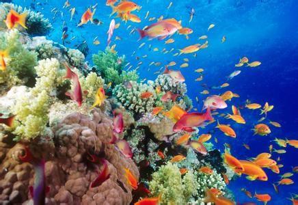 厦门海底世界门票,厦门海底世界门票是多少?