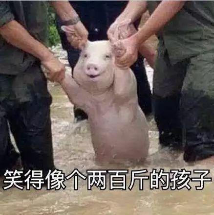 明明是狗年,为什么最火的是蠢萌的猪猪表情包? 轻松一刻 第6张