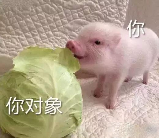 明明是狗年,为什么最火的是蠢萌的猪猪表情包? 轻松一刻 第25张