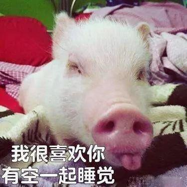 明明是狗年,为什么最火的是蠢萌的猪猪表情包? 轻松一刻 第30张