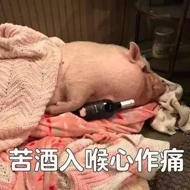 明明是狗年,为什么最火的是蠢萌的猪猪表情包? 轻松一刻 第32张