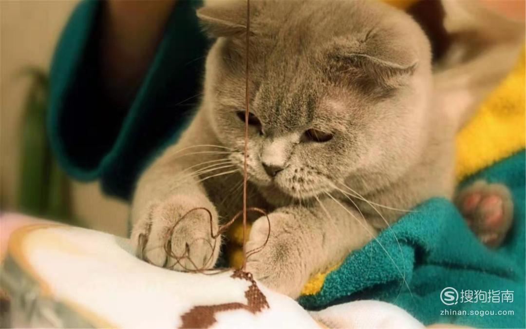 为什么猫猫喜欢跟人一起睡觉?原因是什么