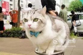 猫咪发情了怎么办?