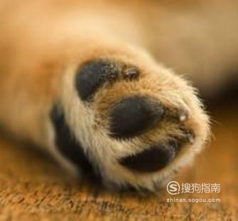 怎么给狗狗剪指甲?,