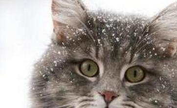 孕妇家庭养猫需要注意的事项? 这些知识你不一定知道