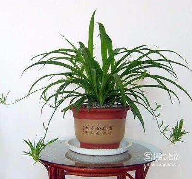 最适合家养的植物有哪些?