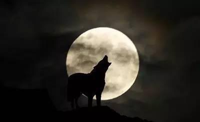 狼人杀怎么玩??,看
