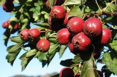 富含维生素C的水果有哪些?
