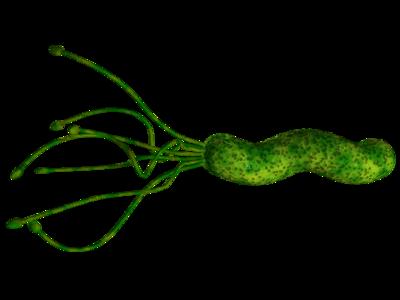 怎么检查幽门螺杆菌,来研究下吧