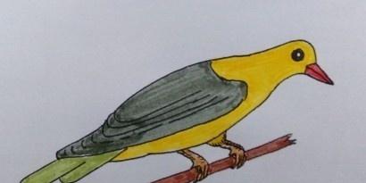 鸟的画法教程,涂色简笔画 你需要学习了