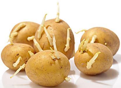 土豆发芽后还能吃吗,