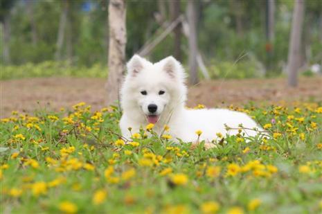 怎样辨别狗狗中毒的症状,来充电吧