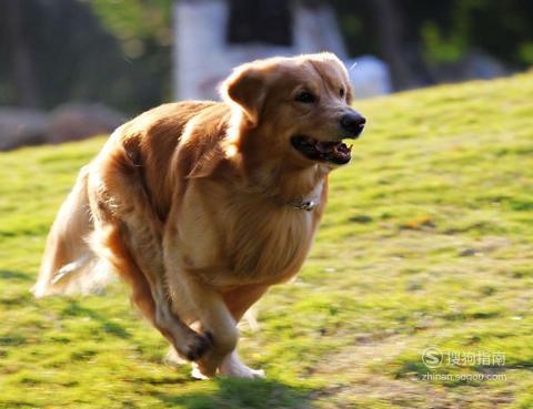 如何让家里的狗狗安然度过这个夏天,这几步你要了解