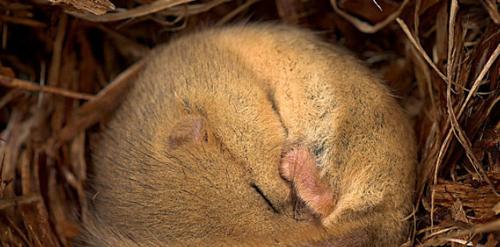 有哪些动物是会冬眠的 冬天冬眠的动物有哪些 你值得一看的技巧