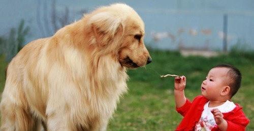 解密:狗狗为什么喜欢吃草,狗吃草是生病了吗?,这些经验不可多得