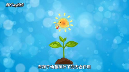 如何种植芒果,来学习吧