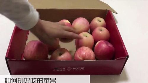 怎样挑选好吃的苹果,