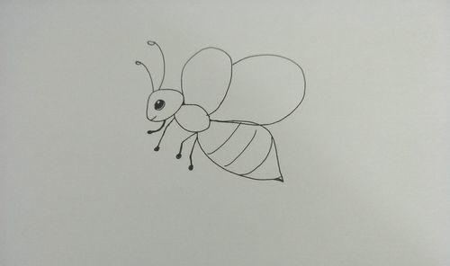 蜜蜂简笔画怎么画 具体内容