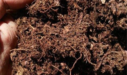 自制腐叶土有机肥发酵