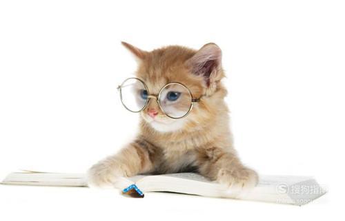 怎么养小猫咪,来看看吧