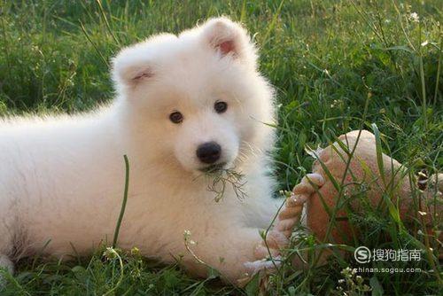 新买的小狗晚上一直乱叫怎么办?