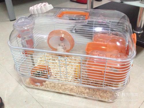 养仓鼠需要注意什么 养仓鼠注意事项,你值得一看的技巧