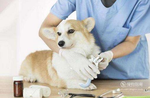 狗狗不吃不喝没精神怎么办