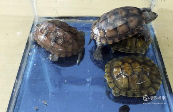 家养乌龟怎么过冬