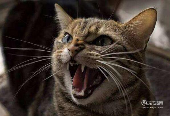 怎么通过牙齿判断猫咪的年龄