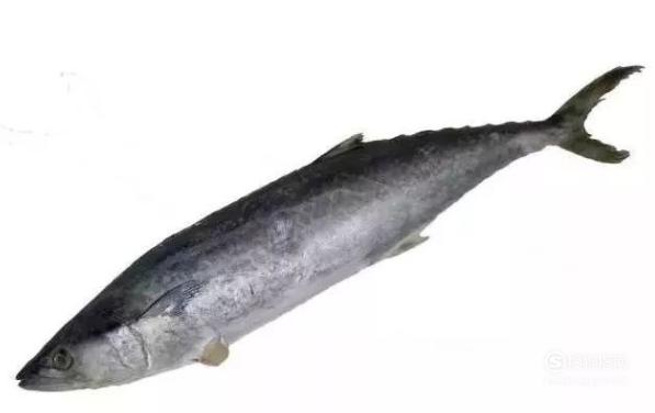 鱼有毒的部位不能吃 看完就知道了