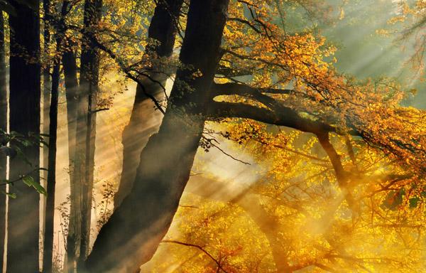 秋天旅游适合去哪儿,值得收藏