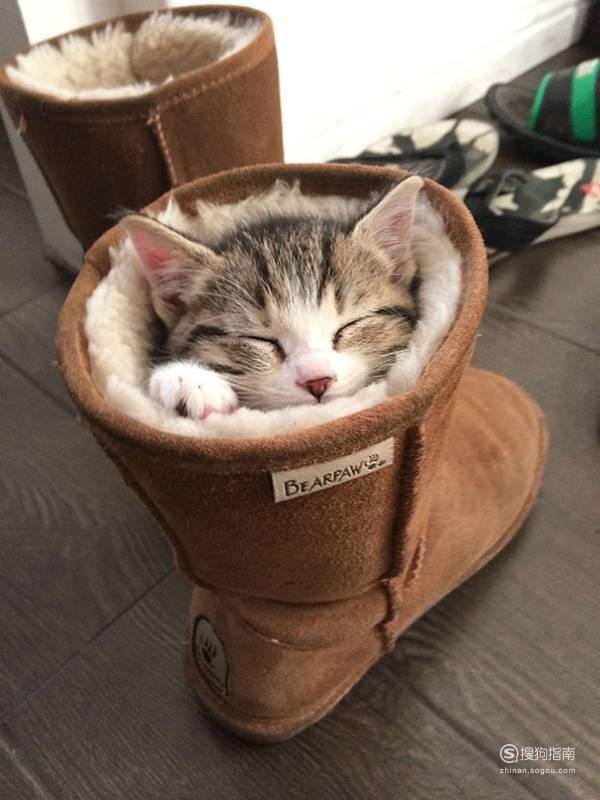 怎样引导猫到窝里睡觉