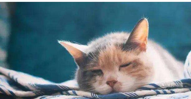 猫咪呕吐的治疗办法(呕吐的原因) 详细始末