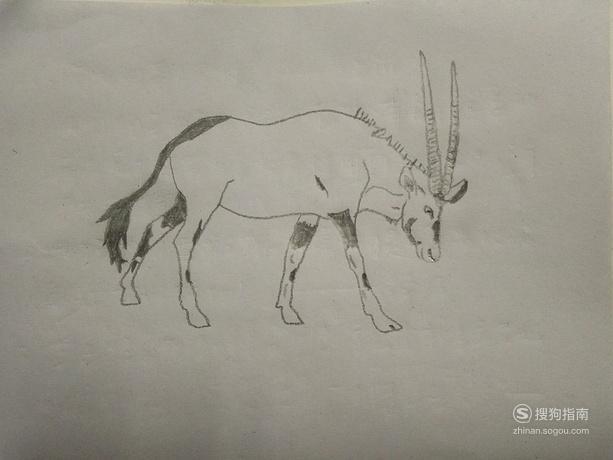 简笔画动物之羚羊,来充电吧