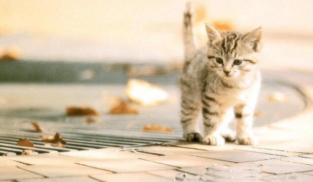 猫咪得了抑郁症怎么办? 划重点了
